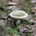 Начало грибного сезона