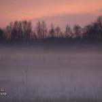 Зимний туман