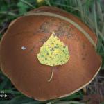 Листья и грибы