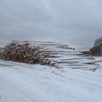 Лесозаготовка возле Рушиново