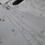 Лыжи: Одерихино — Охотничья вышка