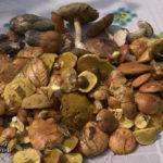 Открытие грибного сезона
