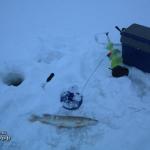 Зимняя рыбалка на Вашутинском